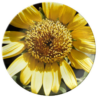Yellow petals of a large sunflower plate