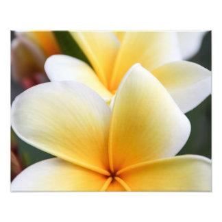 Yellow Plumeria Flower Frangipani Floral Design Photo