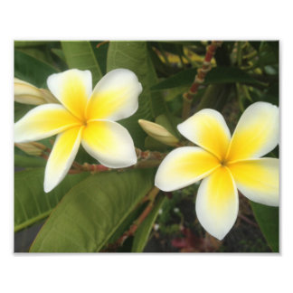 Yellow Plumeria Photo Print