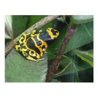 Yellow Poison Dart Arrow Frog Postcard