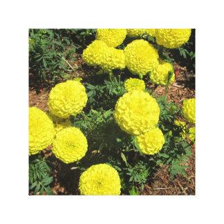 Yellow Pompom Marigolds Garden Plants Gallery Wrap Canvas