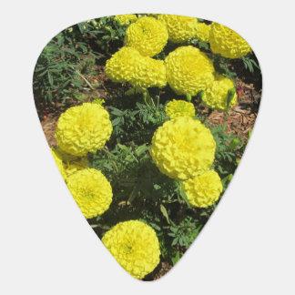 Yellow Pompom Marigolds Garden Plants Plectrum