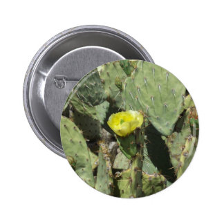 Yellow Prickly Pear Blossom Buttons