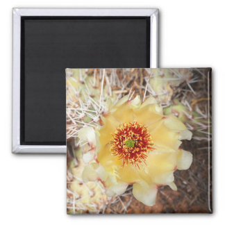 Yellow prickly pear blossom square magnet
