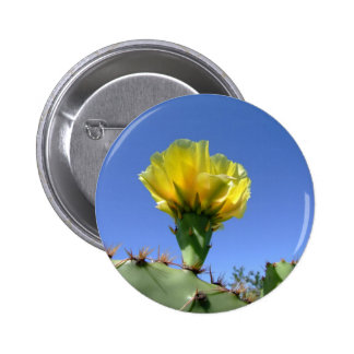 Yellow prickly pear cactus flower buttons