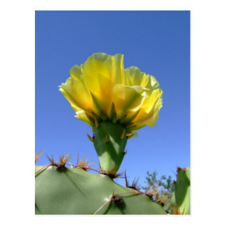 Yellow prickly pear cactus flower postcard