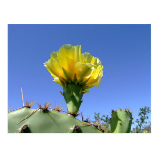 Yellow prickly pear cactus flower post card