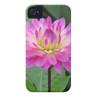 Yellow Purple Dahlia iPhone 4 Cover