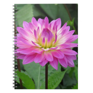 Yellow Purple Dahlia Notebook