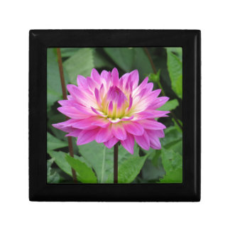 Yellow Purple Dahlia Small Square Gift Box