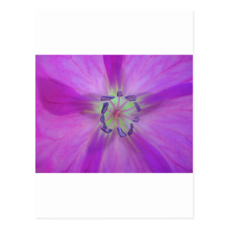 Yellow-purple plant star with bloom stamps postcard
