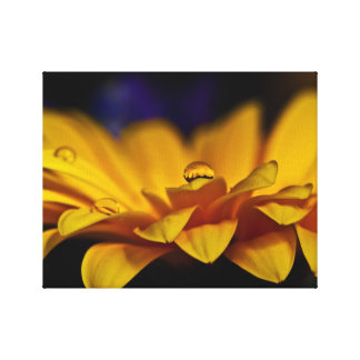 Yellow Rain Kissed Gerbera Canvas Print