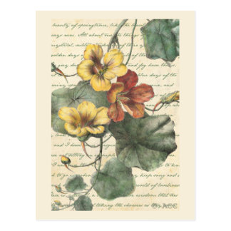 Yellow Red Flower Vine Postcard