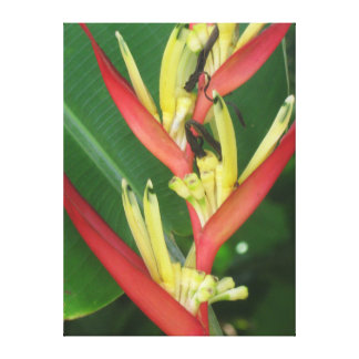 Yellow Red Heliconica Bird of Paradise Canvas Print