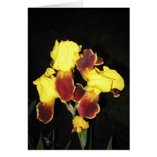 Yellow Red Iris At Dusk Note Card