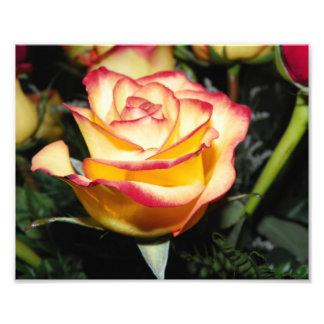 Yellow & Red Rose Photo Art