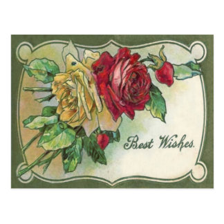 Yellow Red Roses Rose Postcard
