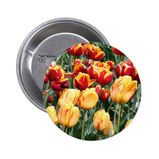 Yellow red Tulip flowers in bloom 5 Button