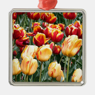 Yellow & red Tulip flowers in bloom 5 Silver-Colored Square Decoration