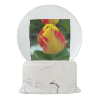 yellow red tulips snow globes