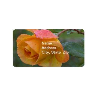 Yellow Rose3 Label