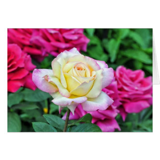 Yellow Rose Among Red Blossoms Card