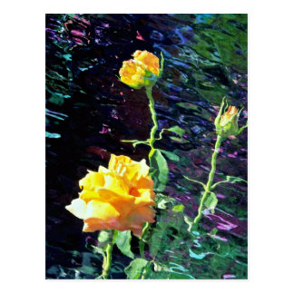 Yellow rose and buds, incandescent water glass dup postcard