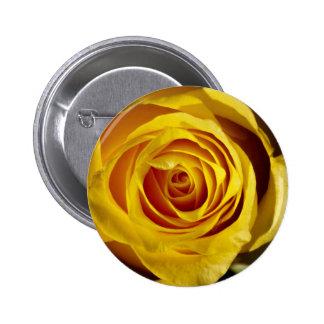 Yellow Rose Knappar Med Nål