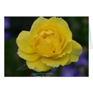 Yellow Rose Blank Greeting Card