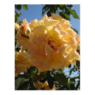 Yellow Rose Blue Sky Postcard