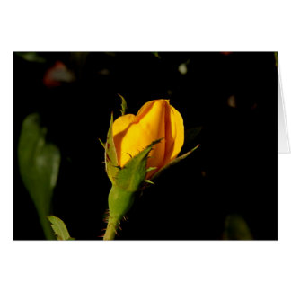 Yellow Rose Bud Cards