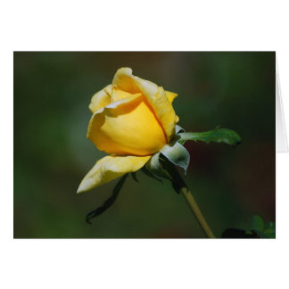 Yellow Rose Bud Card
