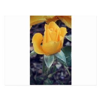Yellow Rose Bud Postcard