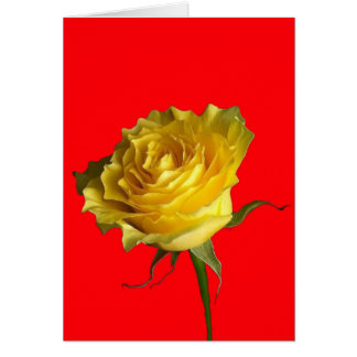 Yellow  Rose, Chinese Red Gifts by Sharles Card