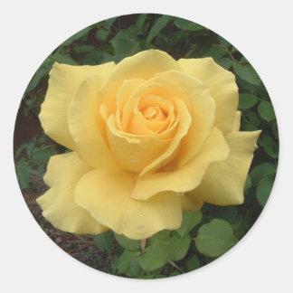 Yellow Rose Classic Round Sticker