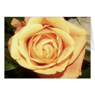 Yellow Rose | Greeting Card