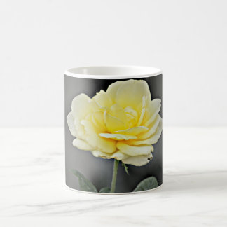 Yellow Rose In Black Coffee Cup