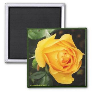 'Yellow Rose' Magnet