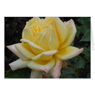 Yellow Rose, Northern Ireland Card