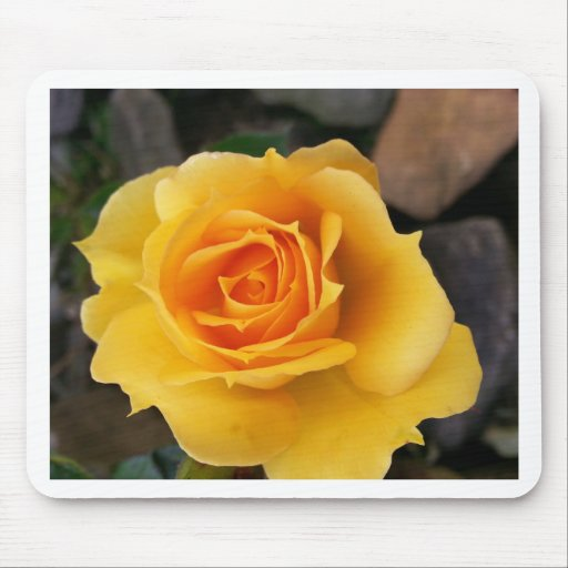 Yellow Rose of Love Mousepad