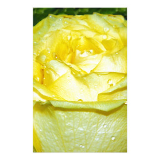 Yellow Rose of Love_ Stationery Paper