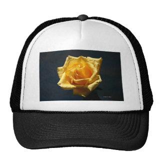 Yellow Rose on a dark background Hat