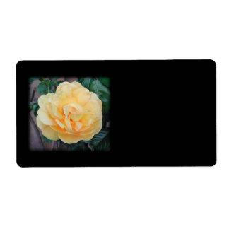 Yellow Rose, on black background.