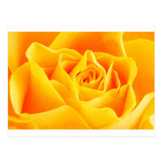 Yellow rose painted postcard