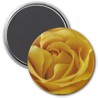 "Yellow Rose Petals 3"" Round Magnet"