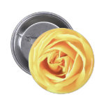Yellow rose print pinback button