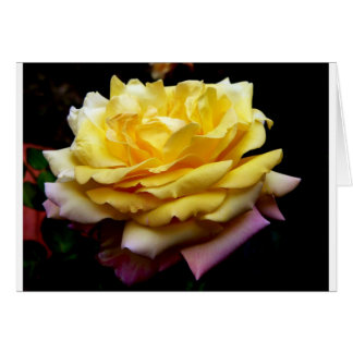 Yellow Rose Products Card