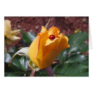 Yellow rosebud with ladybug card