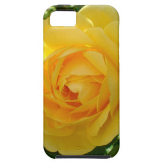 Yellow Roses 3 iPhone 5 Case