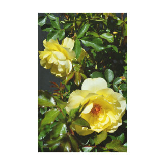 Yellow Roses by environmental Artist Apollo Canvas Print